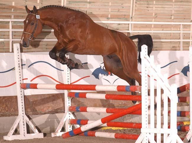 A caballo Silla Francs