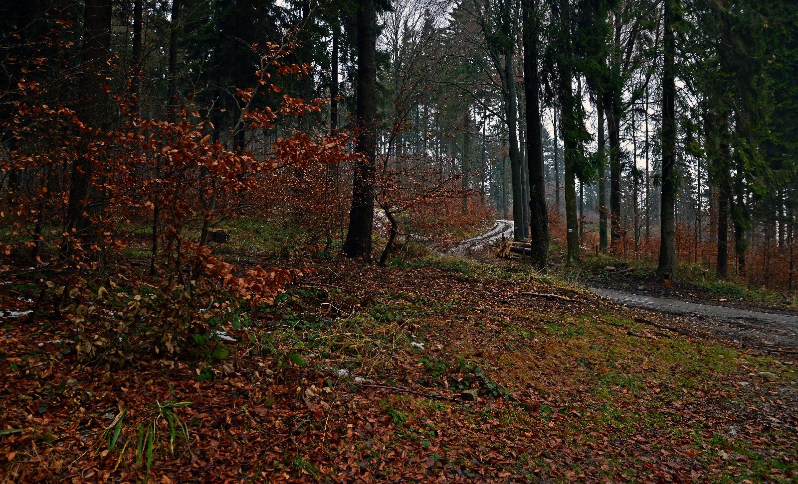 Góry Bardzkie - Podzamecka Przełęcz