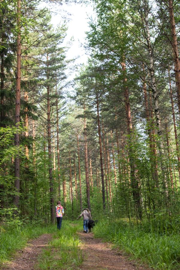 PauMau blogi nelkytplusbloggari nelkytplus nelkytplusblogit laukaa metsäpolku lapset metsässä metsätie luontokuva