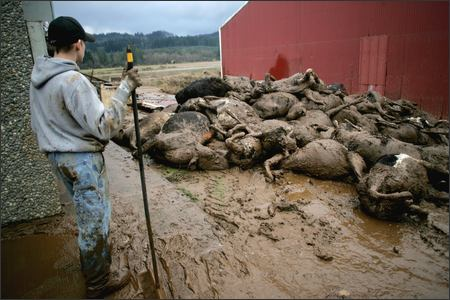 Image result for mass of dead animals