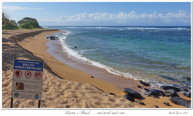Larsen's Beach: ... and monk seals rest...