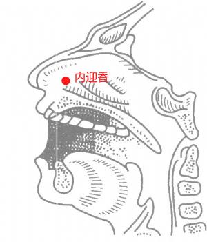 內迎香穴位 | 內迎香穴痛位置 - 穴道按摩經絡圖解 | Source:big5.wiki8.com