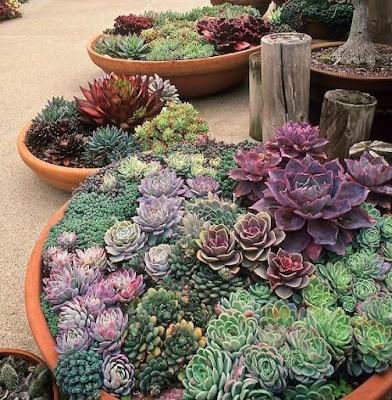 Cara Hias Pokok Kaktus