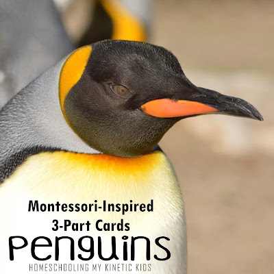 Printable matching cards for Safari Ltd Penguin Toob.  Use for Montessori 3-Part lessons, sensory bins, crafts, small world play, and so much more.  Great for lessons about marine birds, Antarctica, snow, or winter.
