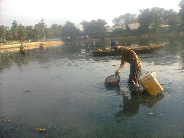 Cara Mencari Cacing Sutra di Sungai