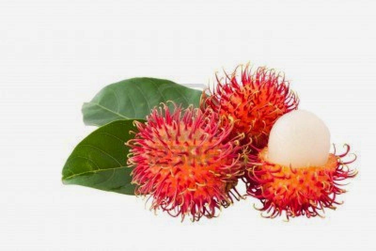 Obat Herbal Pembakar Lemak