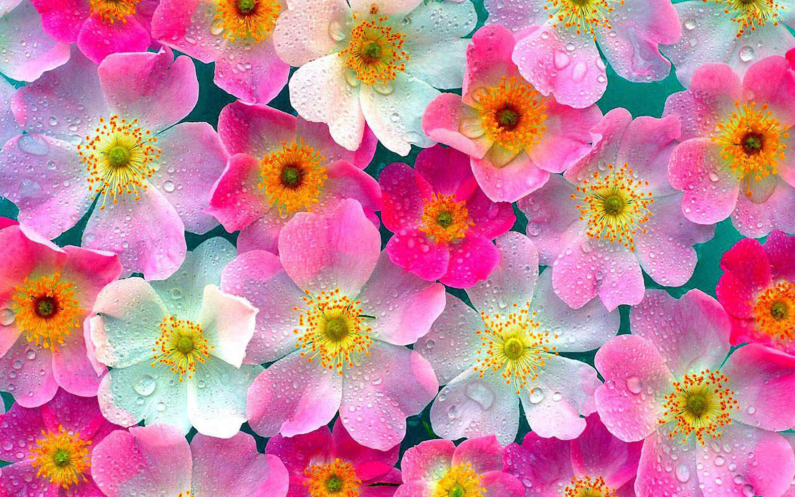 wallpaper: Pink Flowers Wallpapers