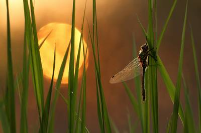 Dragon Fly & Sun