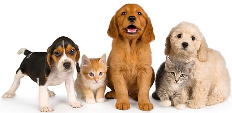 Wholesale pet supplies - Discount Pet supplies - Vet