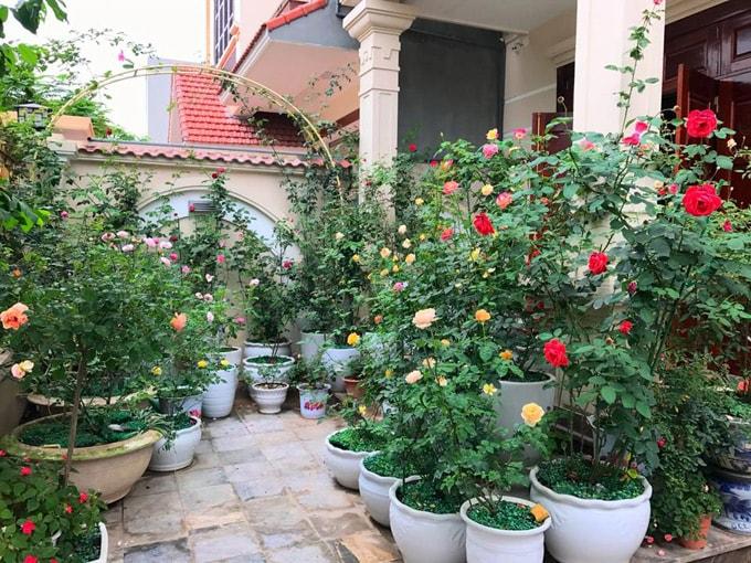 Sân vườn 50 m2 phủ kín hoa hồng của bà mẹ Hòa Bình -4