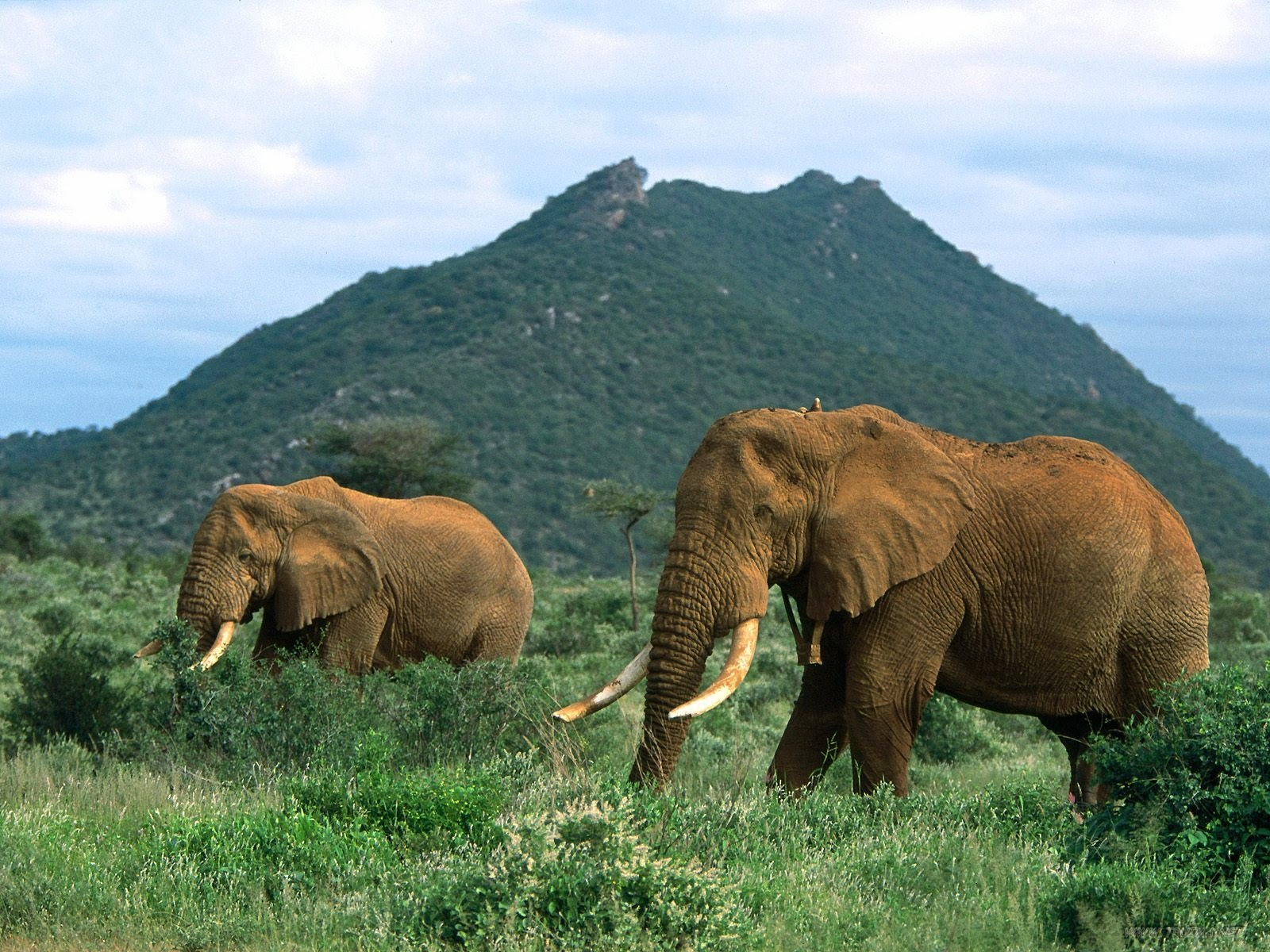 elephants wallpapers world - photo #4