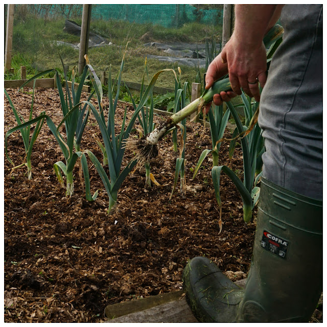 lifting a few leeks - a stubborn optimist blog - C. Gault 2019