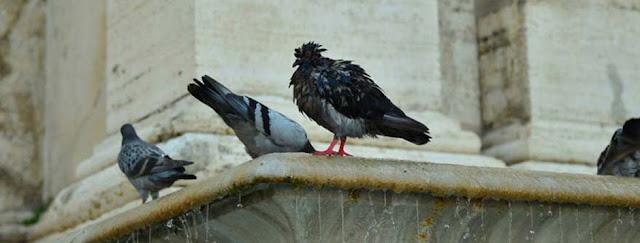control aves palomas castellón