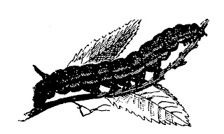 caterpillar insect image clip art digital download