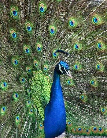 مجموعهة كبيرة من صور الحيوانات بجودة عاليه HD