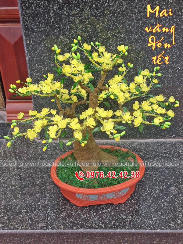 Goc bonsai cay hoa mai tai Cao Dat
