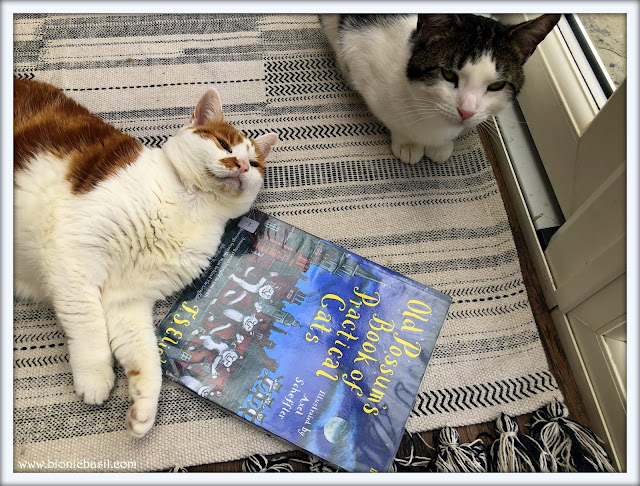 Amber and Melvyn's Story Time ©BionicBasil® Feline Fiction of Fridays #96