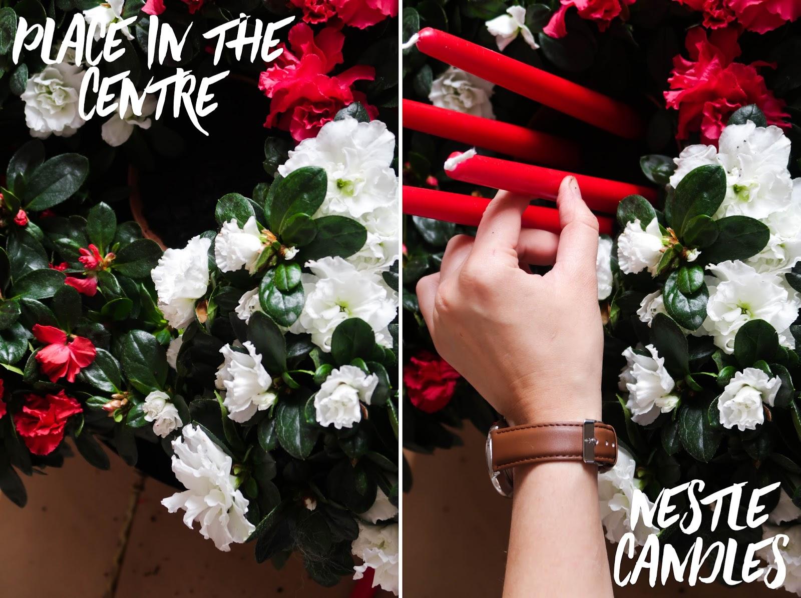 Make you own azalea advent wreath