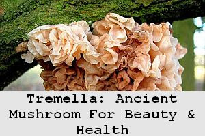 https://foreverhealthy.blogspot.com/2012/04/tremella-ancient-mushroom-for-beauty.html#more