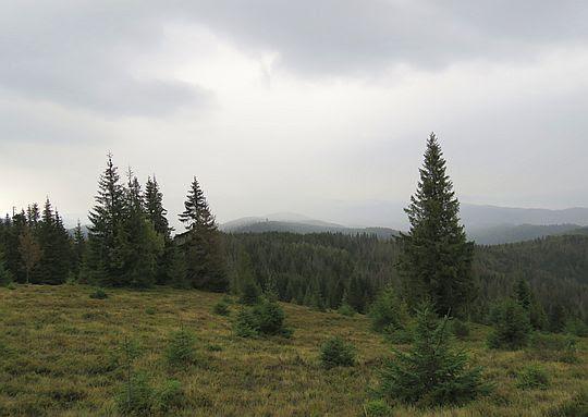 Polana Cioski na stokach Kiczory.