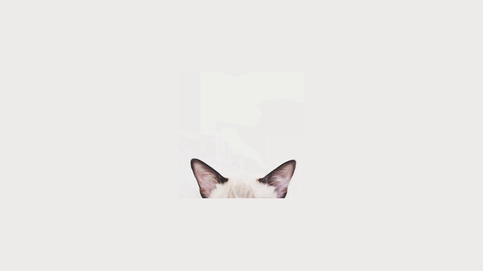 Cute Little Kitten Desktop Wallpapers Littlebug 365 Minimal Wallpaper Version 3