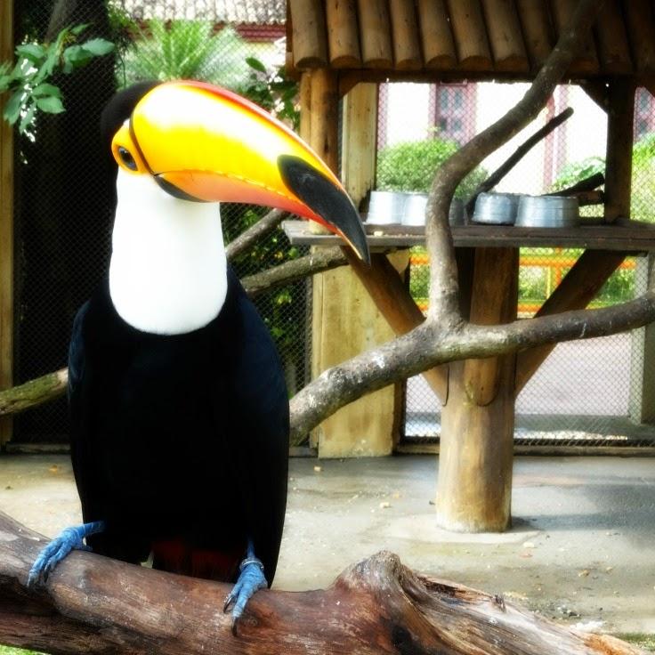 Tucano, no Mundo Mágico das Aves, no Beto Carrero World