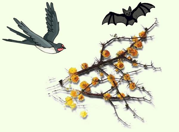 la gaviota el espino y el murcielago