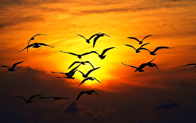 sunset-sky-clouds-birds-photo-wallpaper-1920x1200
