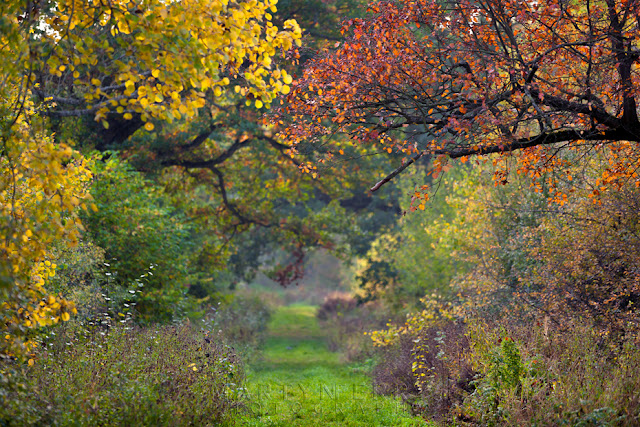 Autumn hues cover the trees in this colourful woodland