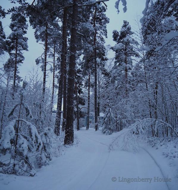 lingonberryhouse, winter, leisure home, talvi, sininen hetki, mökki, lumi