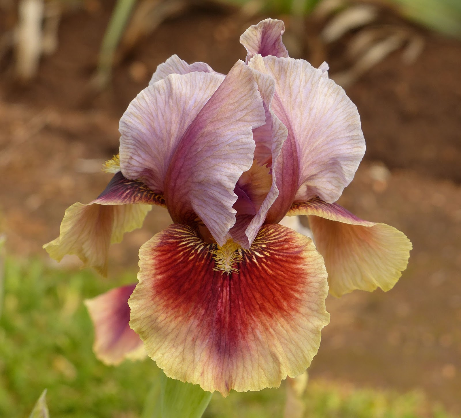 World of Irises: January 2018