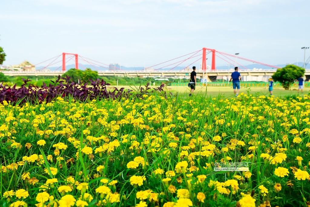 板橋蝴蝶公園,板橋地景花海,2020新北河濱蝶戀季