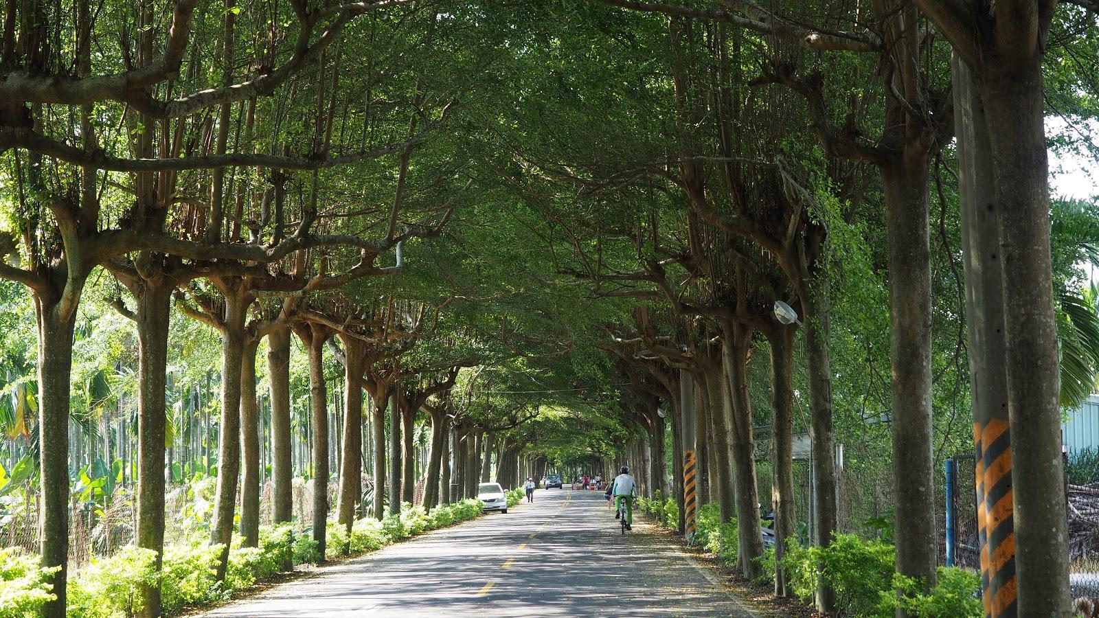 潮州|泗林綠色隧道