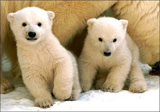 Cute Bears Nice Photos-Images 2012 | Funny And Cute Animals