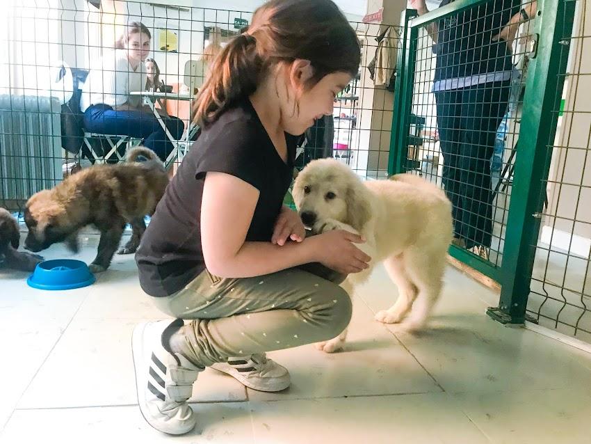 The Doger Café, primer café con perros