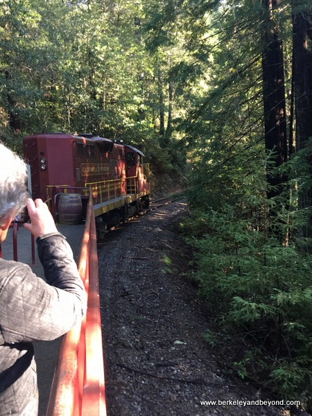 riding through the redwoods on Skunk Train in Willits, California