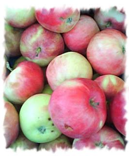 О пользе плодов. Яблоки