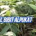 Tips Merawat Bibit Pohon Buah