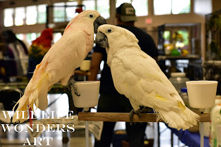 two white parrots