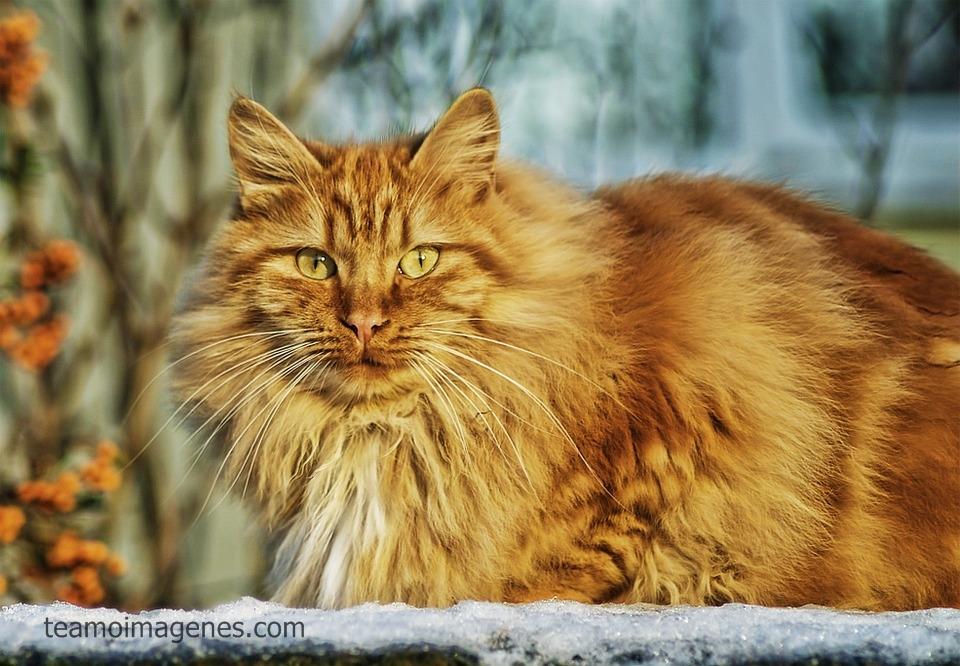 Las mejores imagenes de gatitos tiernos y bellas frases de amor, teamoimagenes.com