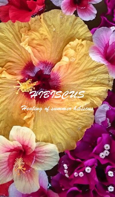 Hibiscus~summer