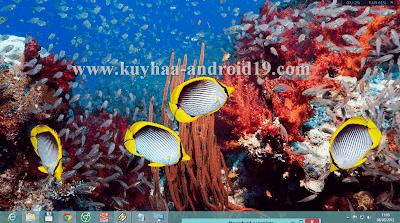 THEME WINDOWS 8 FISH SEA