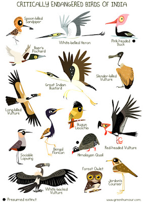 Endangered birds in india essay