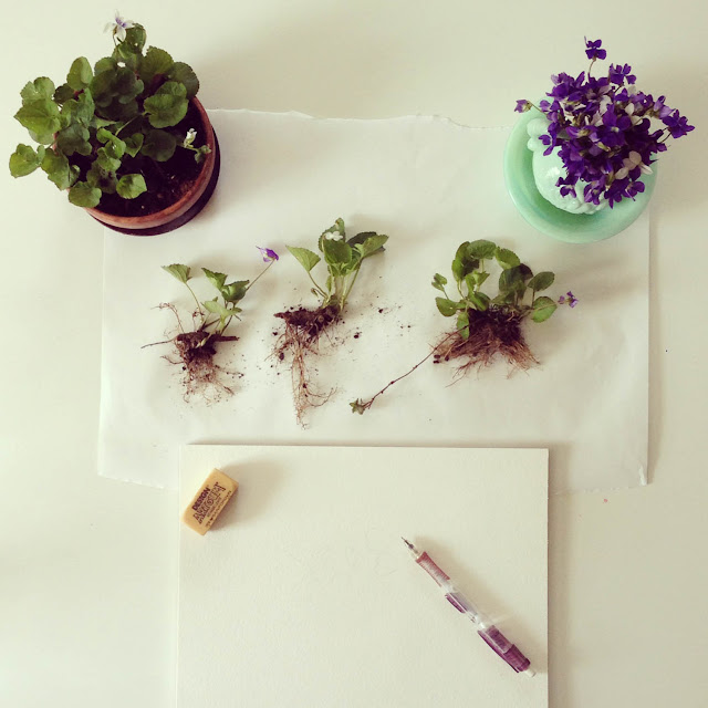 on my painting table, wild violets, nature study, Anne Butera, My Giant Strawberry