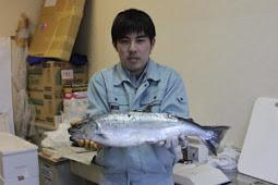 めったに取れないサケ4000円 郷ノ浦町漁協