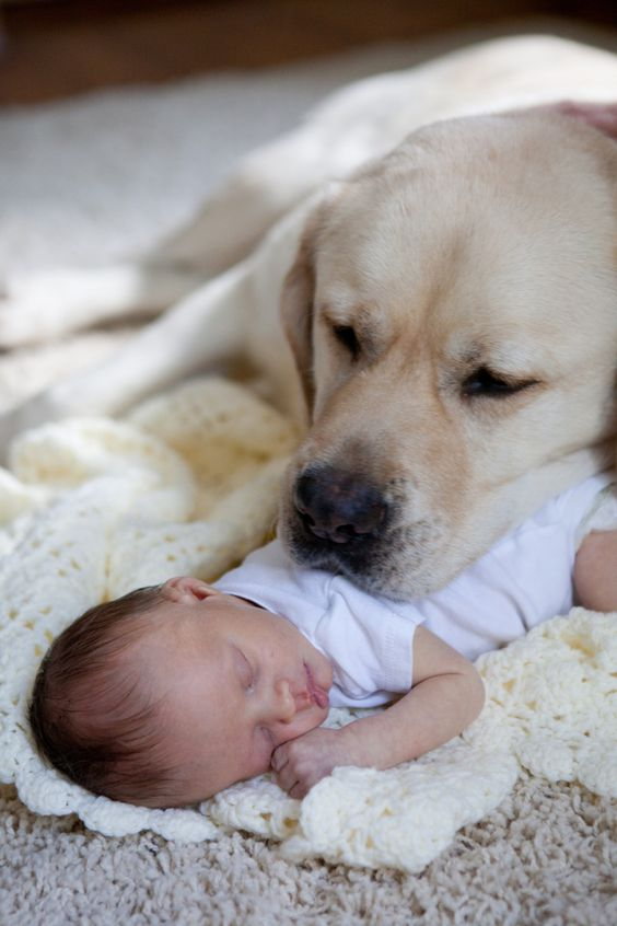 Baby's Best Friend Doggie