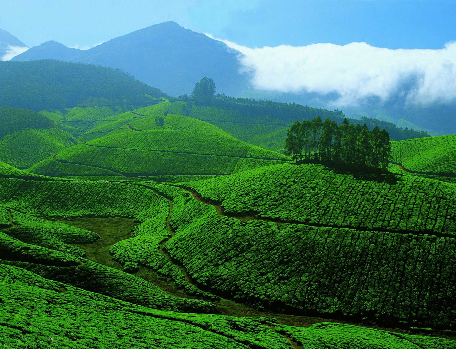 Old agriculture of kerala