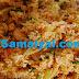 தக்காளி பிரைட் ரைஸ் செய்வது எப்படி? | Tomato Fried Rice !