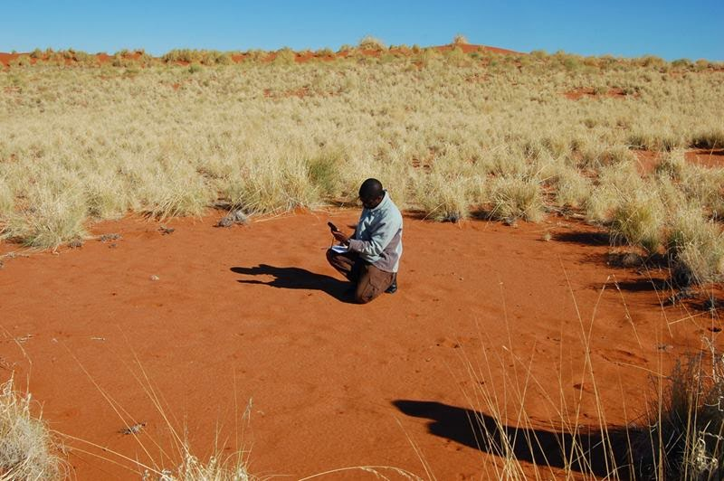 "The Namib Desert of southwestern Africa, is home to a mysterious phenomenon called ""fairy circles""– nearly circular barren patches within a sparse matrix of small short-lived grass species."