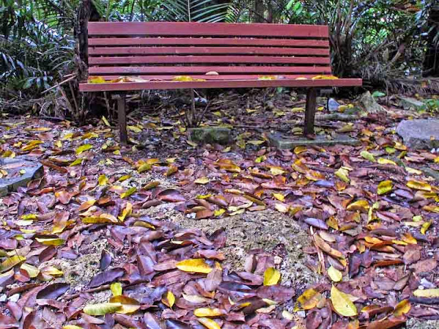 park bench,wooded area